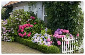 Add Seasonal Color for an always blooming landscape